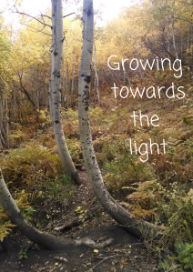 Growing  towards light