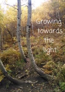 Growing towards light