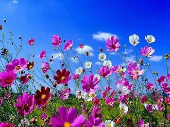 spring-flowers-40321988855_xlarge